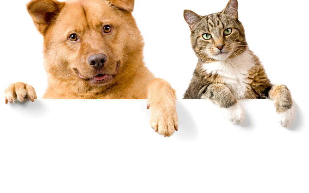 Are cats better pets than dogs?